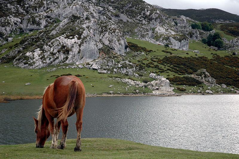 Lago ercina lagos de covadonga