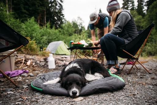 acampada con perro en camping