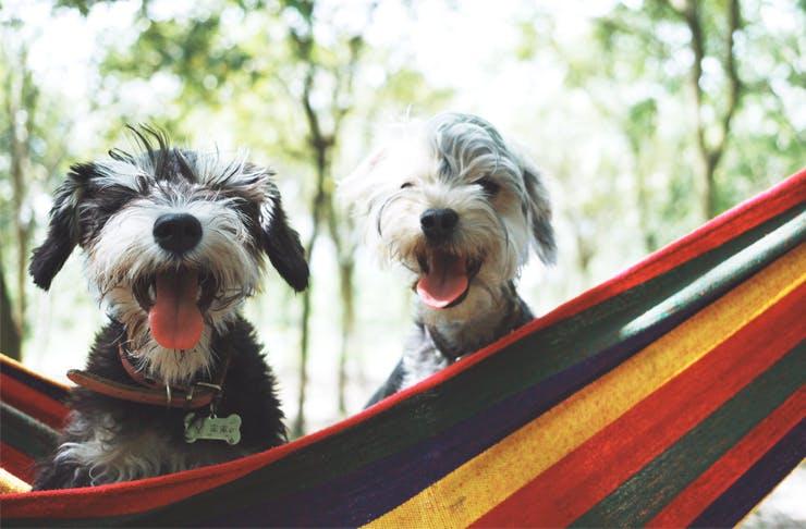 Todo Para Ir De Camping Y Disfrutar Con Tu Perro 2020
